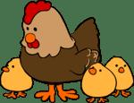 Kippen Houden In Een Woonwijk
