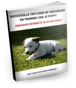 Succesvolle-tips-puppy