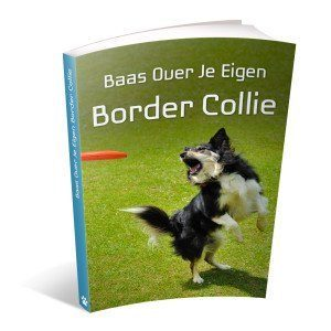 baas-over-je-eigen-border-collie