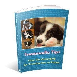 border-collie-geheimen-puppy-tips