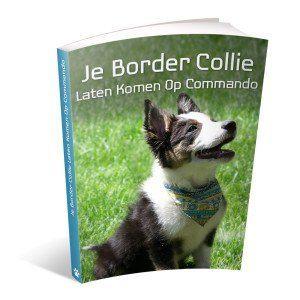border-collie-leren-komen-op-commando